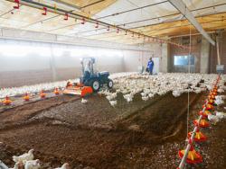 fräse für das zerhacken und mischen des einstreu von geflügelfarmen und kühställe pavo 120